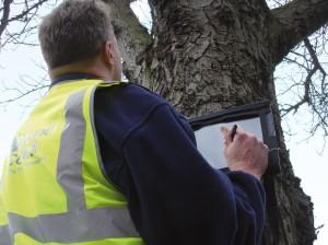 Tree-Surveys-Surgery
