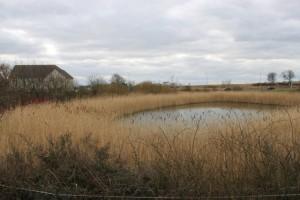 philaldous-Suds_pond_at_Cromar_Drive_-credit edward mcmaihin_